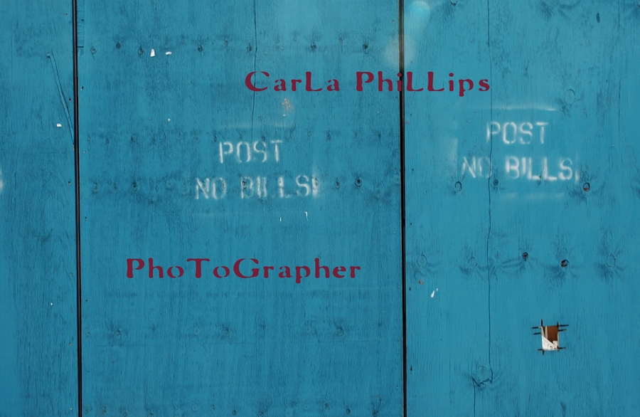 PHOTOGRAPHER  Carla Phillips